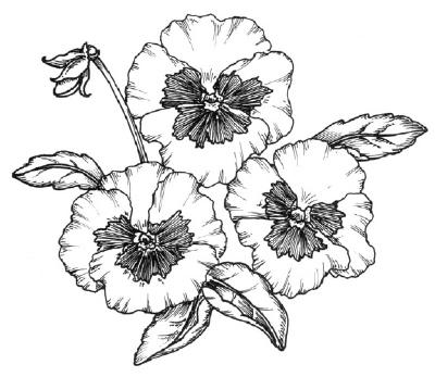 Как нарисовать цветы Анютины глазки в 5 шагов.
