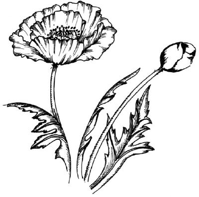 Как нарисовать цветы Маки в 5 шагов.