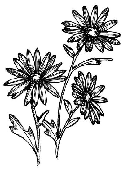 Как нарисовать цветы Ромашки в 5 шагов.