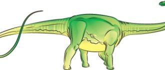 Как нарисовать динозавра Диплодок
