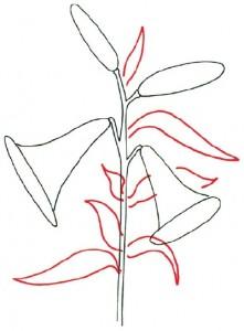 Как нарисовать цветы Лилии поэтапно в 5 шагов. Шаг 2