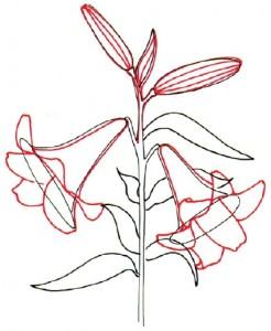 Как нарисовать цветы Лилии поэтапно в 5 шагов. Шаг 3