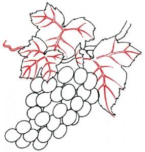 Как нарисовать гроздь винограда поэтапно в 5 шагов. Шаг 4