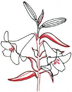 Как нарисовать цветы Лилии поэтапно в 5 шагов. Шаг 4