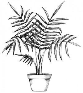 Как нарисовать Пальму поэтапно в 5 шагов. Шаг 5