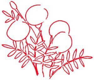 Как нарисовать Цветы Календулы поэтапно в 5 шагов 2