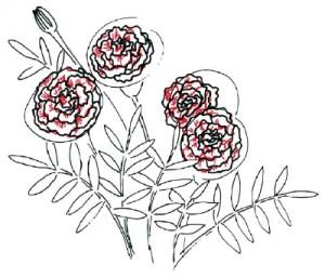 Как нарисовать Цветы Календулы поэтапно в 5 шагов 4