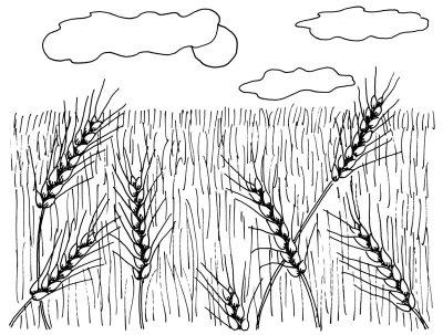 Как нарисовать Пшеничные поля поэтапно в 4 шага