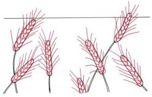 Как нарисовать Пшеничные поля поэтапно в 4 шага 3