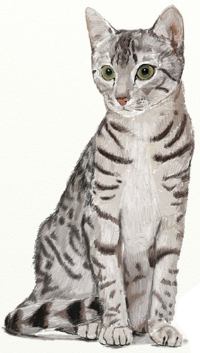 Как нарисовать Кошку поэтапно в 5 шагов