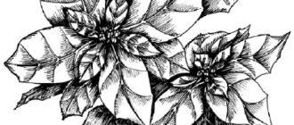Как нарисовать цветы молочай