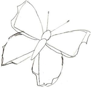 Как нарисовать Бабочку поэтапно в 5 шагов 4