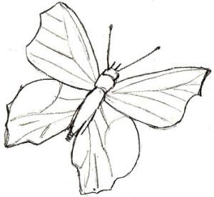 Как нарисовать Бабочку поэтапно в 5 шагов 5