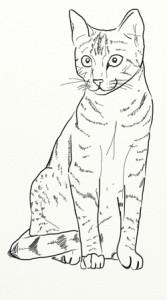 Как нарисовать Кошку поэтапно в 5 шагов 6