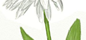 Как нарисовать ромашки