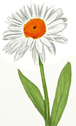 Как нарисовать ромашки поэтапно в 5 шагов
