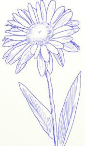 Как нарисовать ромашки поэтапно в 5 шагов 5