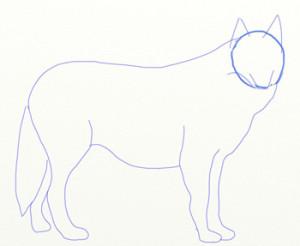 Как нарисовать Волка поэтапно в 6 шагов 4