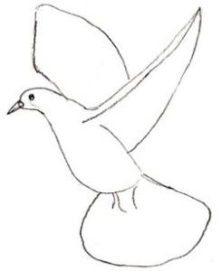 Как нарисовать голубя поэтапно в 5 шагов 4