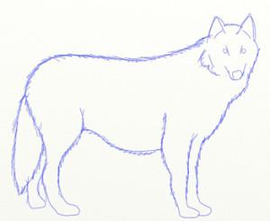 Как нарисовать Волка поэтапно в 6 шагов 5