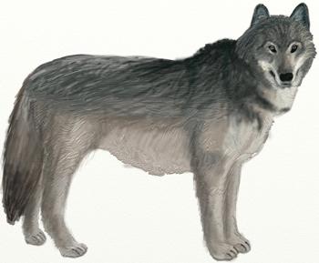 Как нарисовать Волка поэтапно в 6 шагов