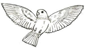 Как рисовать птиц поэтапно в 6 шагов