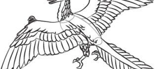 Как нарисовать динозавра Археоптерикс
