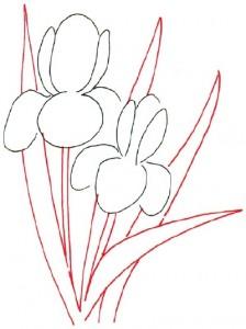Как нарисовать цветы Ирисы поэтапно в 5 шагов. Шаг 2