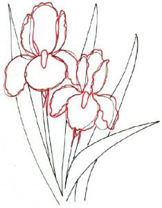 Как нарисовать цветы Ирисы поэтапно в 5 шагов. Шаг 3