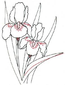 Как нарисовать цветы Ирисы поэтапно в 5 шагов. Шаг 4