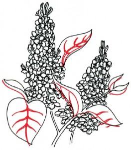 Как нарисовать цветы Сирени поэтапно в 5 шагов. Шаг 4