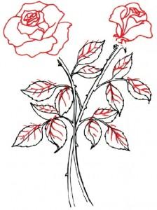Как нарисовать Розы поэтапно в 5 шагов. Шаг 4