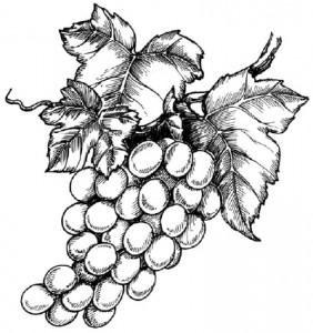 Как нарисовать гроздь винограда поэтапно в 5 шагов.