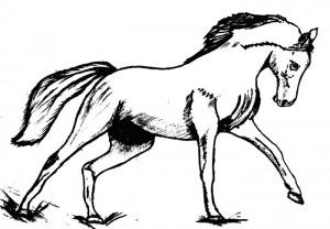 Как нарисовать Лошадь поэтапно в 4 шага 1