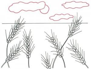 Как нарисовать Пшеничные поля поэтапно в 4 шага 4