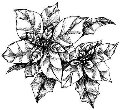 Как нарисовать цветы поэтапно. Молочай (Пуансеттия) в 5 шагов