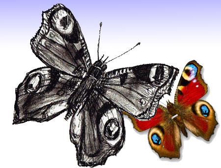 Как нарисовать Бабочку поэтапно в 5 шагов