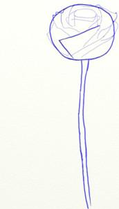 Как нарисовать Розу поэтапно в 5 шагов 4