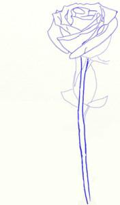 Как нарисовать Розу поэтапно в 5 шагов 5