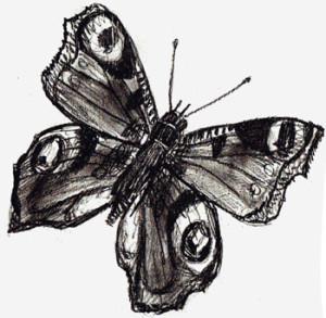 Как нарисовать Бабочку поэтапно в 5 шагов 6