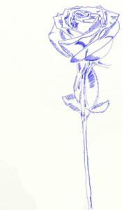 Как нарисовать Розу поэтапно в 5 шагов 6