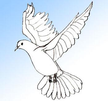 Как нарисовать голубя поэтапно в 5 шагов