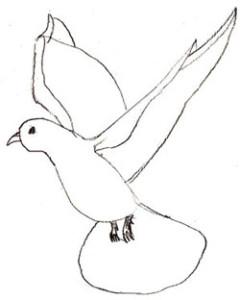 Как нарисовать голубя поэтапно в 5 шагов 5