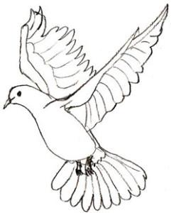 Как нарисовать голубя поэтапно в 5 шагов 6