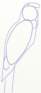 Как нарисовать попугая поэтапно в 5 шагов 3