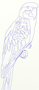 Как нарисовать попугая поэтапно в 5 шагов 6