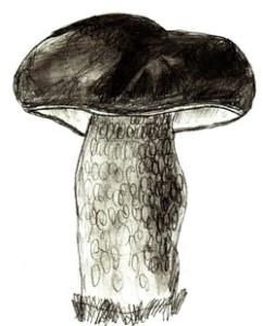 Как нарисовать грибы поэтапно в 6 шагов 6