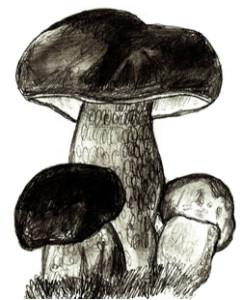 Как нарисовать грибы поэтапно в 6 шагов 7