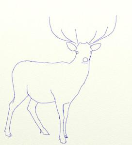 Как нарисовать Оленя поэтапно в 6 шагов 4