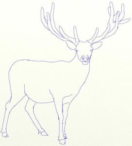 Как нарисовать Оленя поэтапно в 6 шагов 5